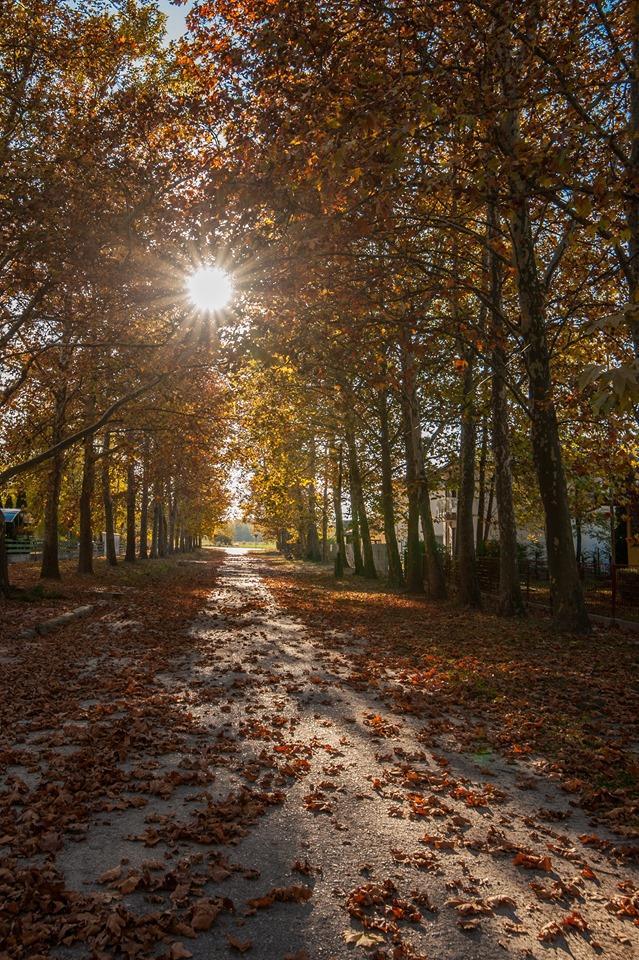 Soltvadkert ősz